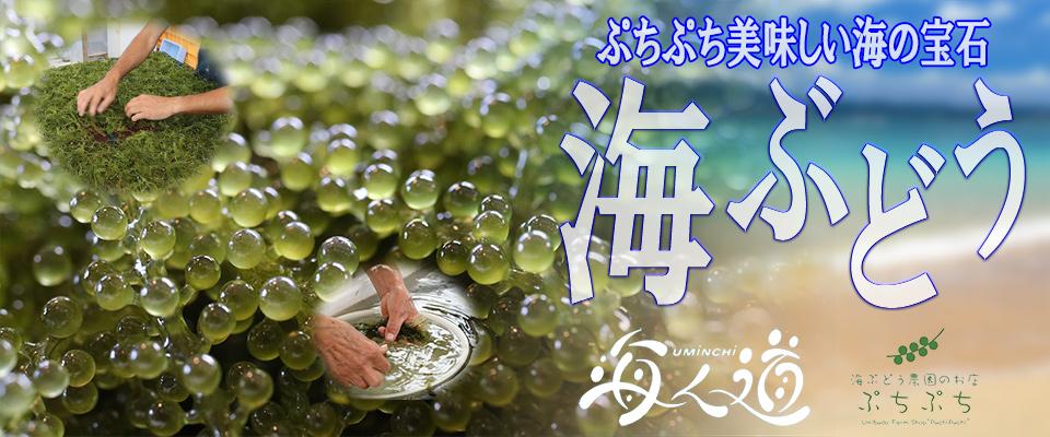 沖縄農園|通販ショップ 沖縄ま〜さん市場